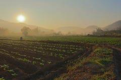 Lever de soleil dans le chiangmai Images libres de droits