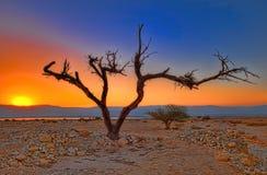 Lever de soleil dans le désert Images libres de droits