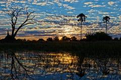Lever de soleil dans le delta d'Okavango images libres de droits