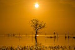 Lever de soleil dans le lac et l'arbre sans feuilles Image libre de droits