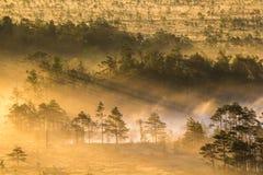 Lever de soleil dans le marais Images stock