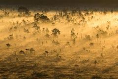 Lever de soleil dans le marais Photo stock