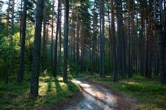 Lever de soleil dans un bois. Images stock