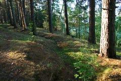 Lever de soleil dans un bois. Photo stock