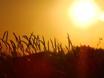 Lever de soleil de blé Images libres de droits