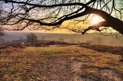 Lever de soleil de branche de Posbank Images libres de droits