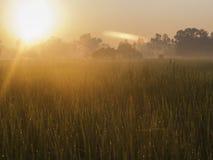 Lever de soleil de champs Photographie stock libre de droits