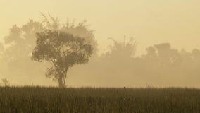 Lever de soleil de champs photos stock