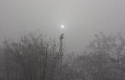 Lever de soleil de corneille Photographie stock libre de droits