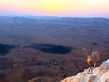 Lever de soleil de cratère de Ramon Photo libre de droits