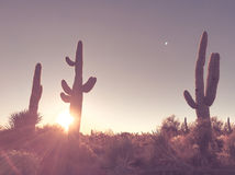 Lever de soleil de désert de l'Arizona, arbre de cactus de saguaro photographie stock