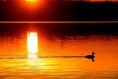 Lever de soleil de Grebe Photos stock