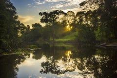 Lever de soleil de jungle sur le fleuve Amazone avec la réflexion dans l'eau Image libre de droits