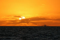 Lever de soleil de Key West vu du pilier blanc de rue Photos libres de droits