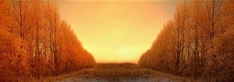 Lever de soleil de l'hiver Photo libre de droits