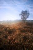 Lever de soleil de l'hiver au-dessus d'horizontal vibrant de campagne image libre de droits