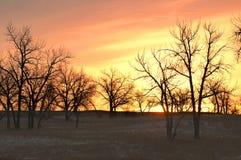 Lever de soleil de l'hiver avec des arbres Images libres de droits