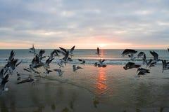 lever de soleil de la Floride Photos libres de droits
