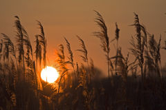 Lever de soleil de la Pologne Nysa Photo libre de droits