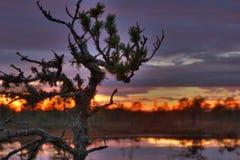 lever de soleil de marais Photos libres de droits