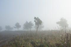 Lever de soleil de matin au-dessus d'un champ avec l'arbre simple et de brouillard dans la distance Photo stock