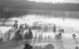 Lever de soleil de matin au-dessus de ville avec le sort de brouillard Photographie stock
