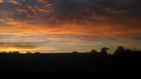 Lever de soleil de matin de Buffalo Photo stock