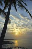 Lever de soleil de palmier Photos stock