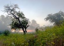 Lever de soleil de paysage Image libre de droits