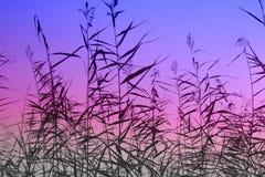 Lever de soleil de précipitation Images libres de droits