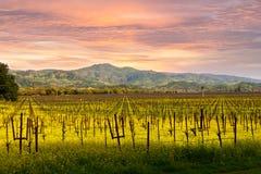 Lever de soleil de ressort de vignobles de Napa Valley Photos stock