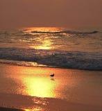 lever de soleil de rivage d'oiseau Photographie stock libre de droits