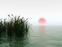 Lever de soleil de roseaux Photographie stock libre de droits