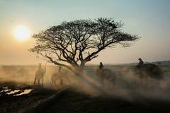 Lever de soleil de safari Photo libre de droits