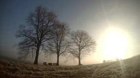 Lever de soleil de Timelapse dans le village banque de vidéos