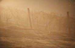 Lever de soleil de vignoble Image libre de droits