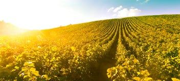 Lever de soleil de vignoble - Champagne Vineyard Image libre de droits