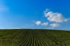 Lever de soleil de vignoble - Champagne Vineyard Photos stock