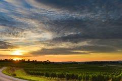 Lever de soleil de vignoble - vignoble de Paysage-Bordeaux Photographie stock libre de droits
