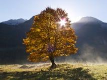 Lever de soleil derrière l'arbre Photo stock