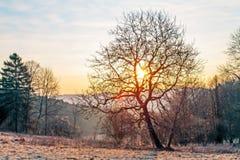 Lever de soleil derrière les arbres Photo stock