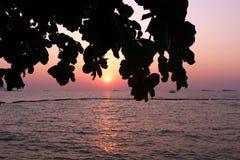 Lever de soleil derrière un arbre Photographie stock libre de droits
