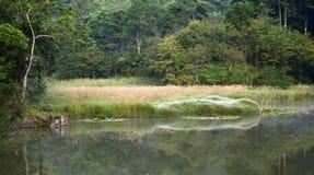 Lever de soleil dramatique au-dessus d'étang avec des fleurs d'herbe sauvage images stock