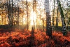 Lever de soleil du feu de fougère photographie stock libre de droits