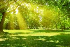 Lever de soleil en beau parc photo stock