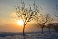 Lever de soleil en hiver avec des arbres Photo stock