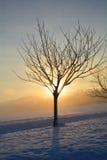 Lever de soleil en hiver avec l'arbre et le brouillard Photo stock