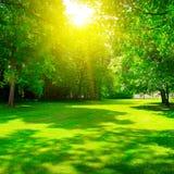 Lever de soleil en parc d'été photo stock