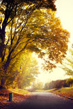 Lever de soleil en parc d'automne Photographie stock libre de droits