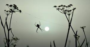 Lever de soleil et araignée rétro-éclairée Image stock